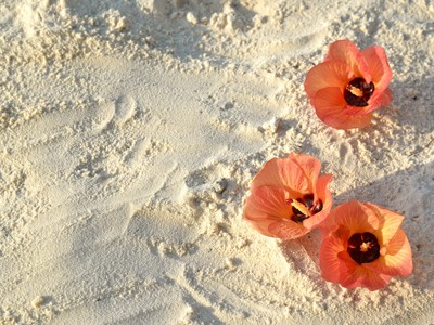 flower-and-sand