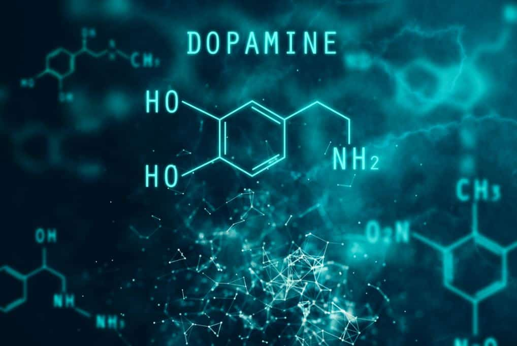 Pleasure And The Brain: The Neuroscience Of Why We Seek Dopamine